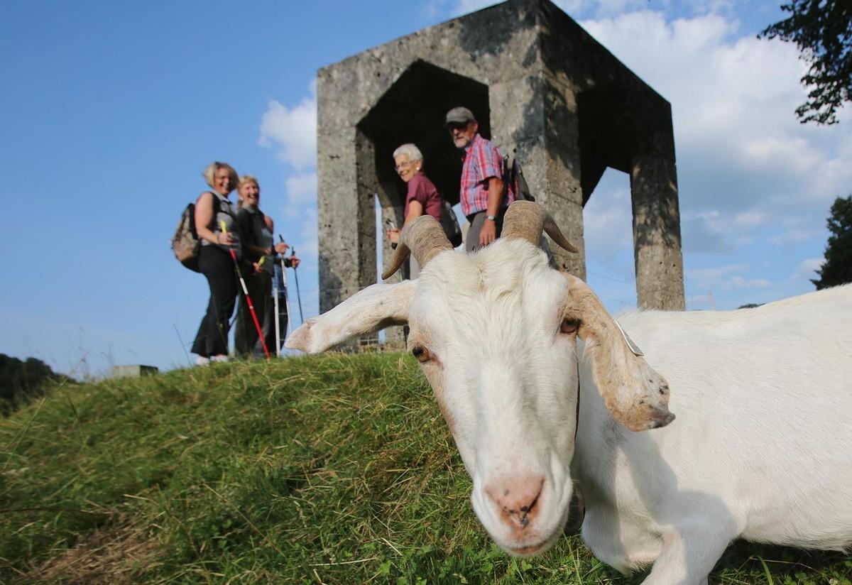 Auf dem Seeburgsteig fühlen sich nicht nur Ziegen wohl.