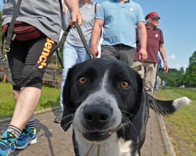 Mit Hund unterwegs am Tag des Wanderns