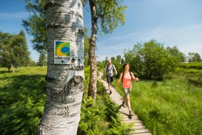 Der Eifelsteig verbindet so vielfältige Landschaften wie hier die Struffelt Heide.