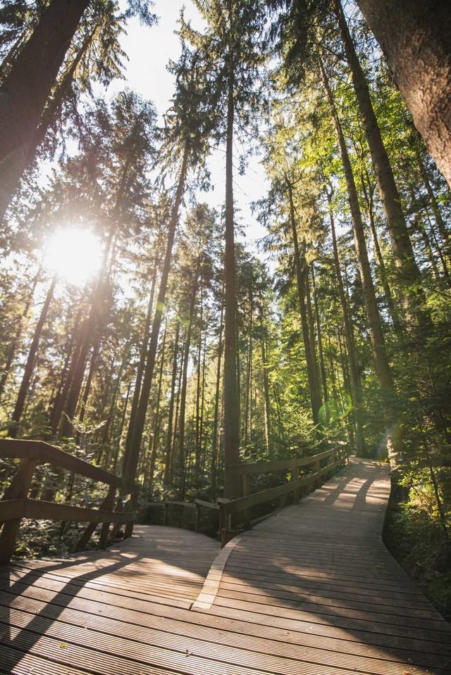 Waldkugelbahn Weg